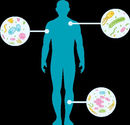 Silueta microbioma