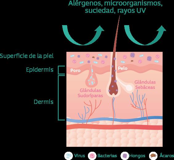 imagen por qué es importante el microbioma